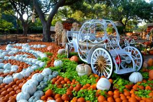 Autumn at the Arboretum @ Dallas Arboretum & Botanical Garden