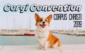 Corgi Convention in Corpus Christi @ JP Luby Beach