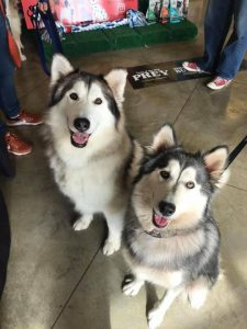 Texas Husky Rescue - Meet & Greet - Hollywood Feed Coppell @ Hollywood Feed