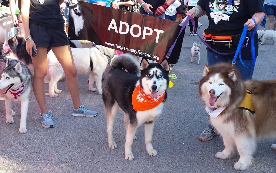 Texas Husky Rescue – Meet and Greet