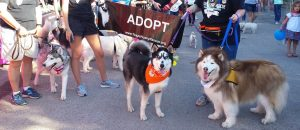 Texas Husky Rescue - Meet and Greet @ Hollywood Feed