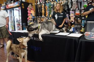 Texas Husky Rescue Meet and Greet @ Hollywood Feed
