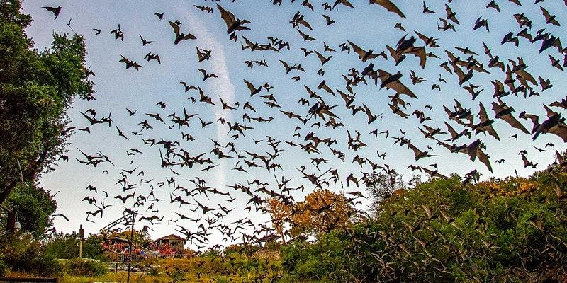 Fredericksburg Bat Festival