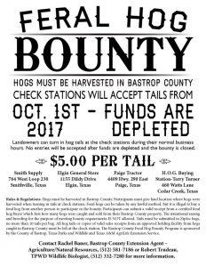 Bastrop County - Feral Hog Bounty @ Bastrop County